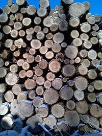 Image of Cut and Stacked Wood